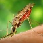 Mosquitos en Punta Cana