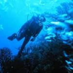 Buceo en Punta Cana